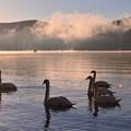 山中湖の初日の出で起床する白鳥。。朝焼けに。。20170101