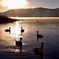 2017年元旦の初日の出 白鳥も元気に泳いで。。20170101