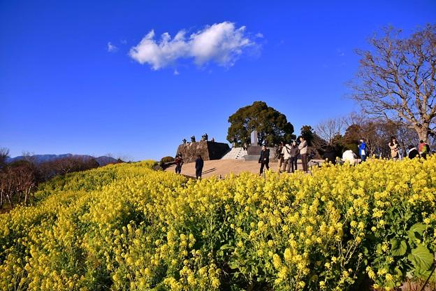 綺麗な青空。。黄色い絨毯な菜の花。。吾妻山公園 20170121