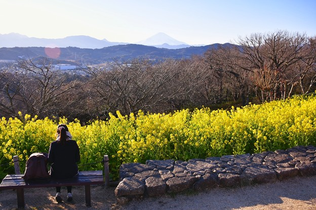 西陽の傾く夕方。。吾妻山公園から見る風景。。20170121