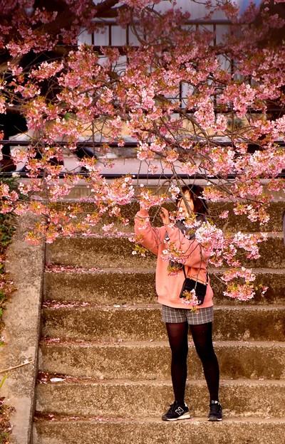 夕暮れの河津川沿い 河津桜を撮る少女。。(^^)20170218