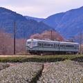 Photos: 静岡の茶畑を走る旧南海ズームカー。。大井川鐵道