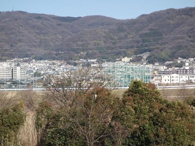 オオタカ若0219 (1)
