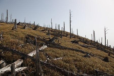 c-110504-082515 かつては原生林だった・・・