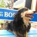 Photos: ベンチに乗っちゃう犬太郎
