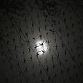 写真: 月を映す