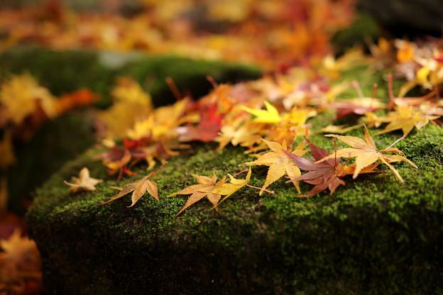 写真: 百済寺参道の紅葉