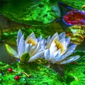 Twins ~Water lily~