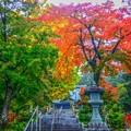 写真: 秋山 霜零覆 木葉落 歳雖行 我忘八
