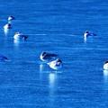 氷点下3℃の風景 ~氷鳥~