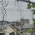Photos: 【5月28日誕生日記念その4】金網・フェンス