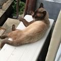 ふてぶてしい野良猫
