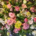 近づく春の喜び