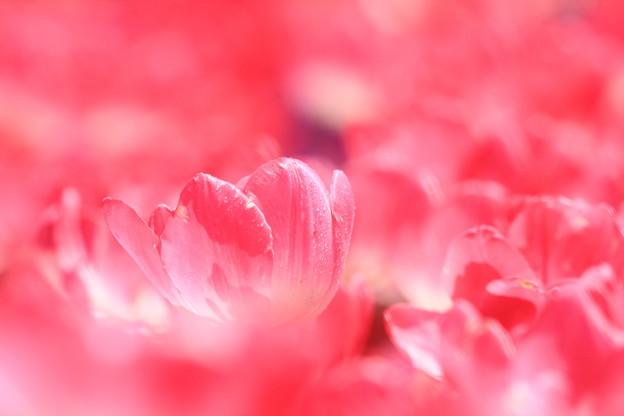 Photos: dream of spring