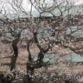 茨城県近代美術館*梅2