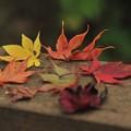 写真: 落  葉