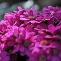 写真: 春  色  2