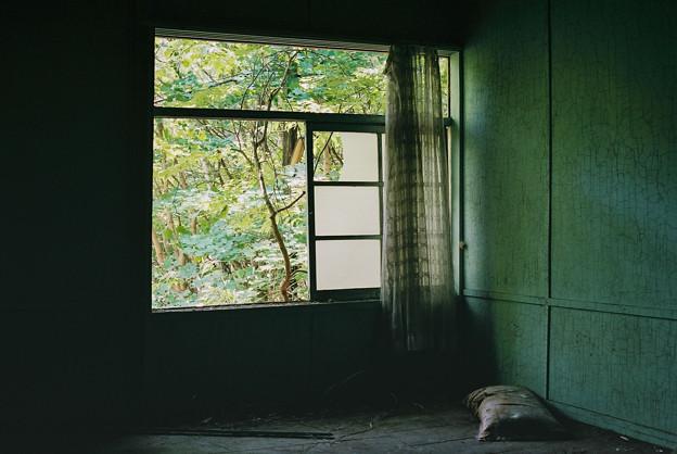 写真: 緑の部屋