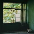 Photos: 緑の部屋