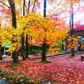 一面の紅葉絨毯@自然観察学習館