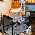Photos: 白蛇さん展示中