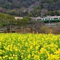 神戸市営地下鉄と菜の花
