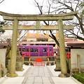Photos: 車折神社前を通過する嵐電