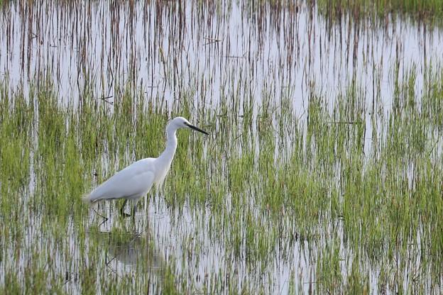 湿地に佇む