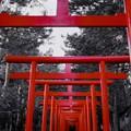 Photos: 紅の魅力