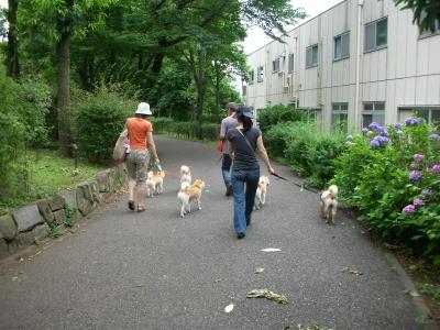 府中の森散歩