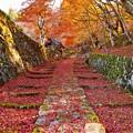 写真: 百済寺-参道