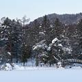 美女ヶ池・冬