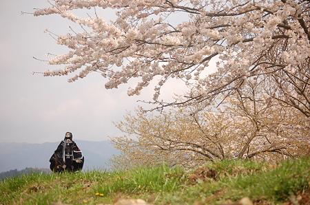 春を迎える