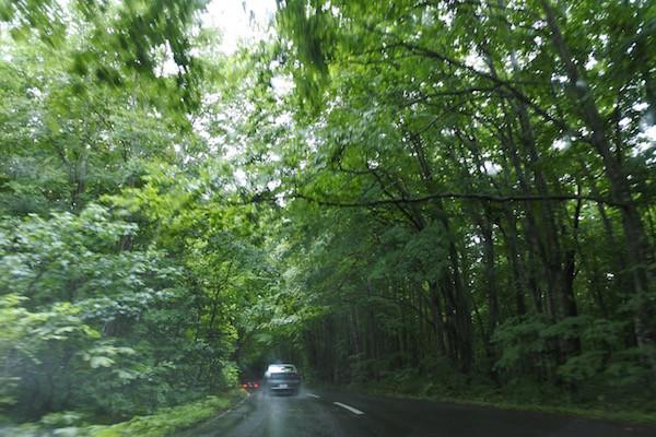「青い森」という名の通り、緑ですが青い森