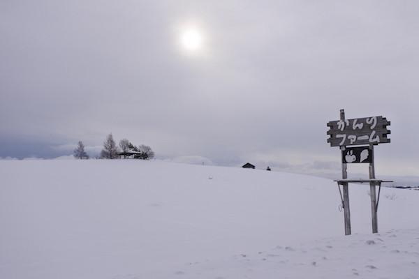 夏には花で覆われるかんのファームの丘も雪で真っ白