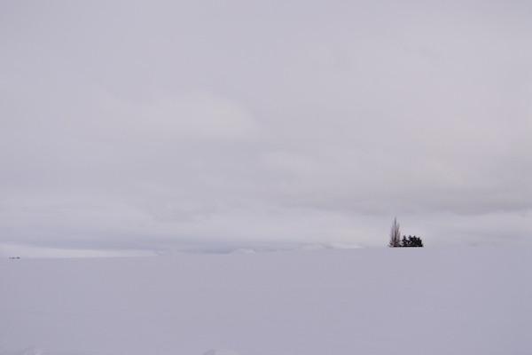 パッチワークの丘へ。丘も空も真っ白!