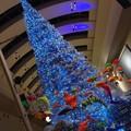 Photos: クイーンズスクエアのクリスマスツリー。