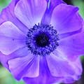 Photos: HCマルニさんの花