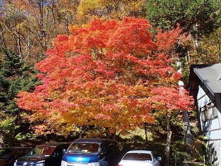 28 11 岐阜 新穂高温泉の紅葉