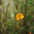 写真: 記憶の中の花