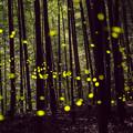 森の妖精♪2
