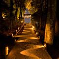 Photos: 武雄神社ライトアップ♪3