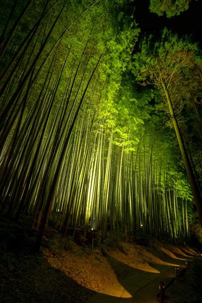 武雄神社ライトアップ♪4