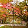 Photos: 雷山千如寺の大椛♪