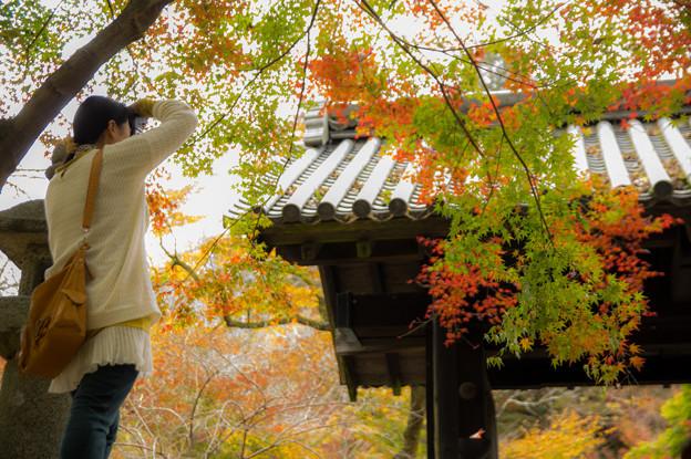秋月の紅葉♪