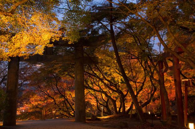 竈門神社の紅葉ライトアップ♪2