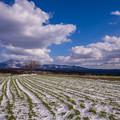 前原の一本桜の雪景色♪