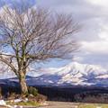 前原の一本桜の雪景色♪2