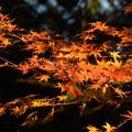秋の夕日に照り映える