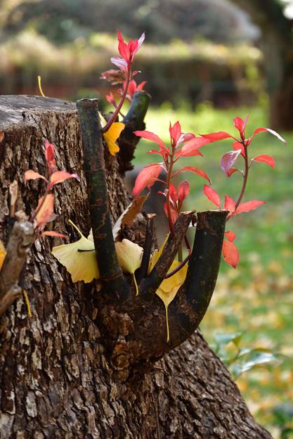 Photos: 小さい秋みつけた
